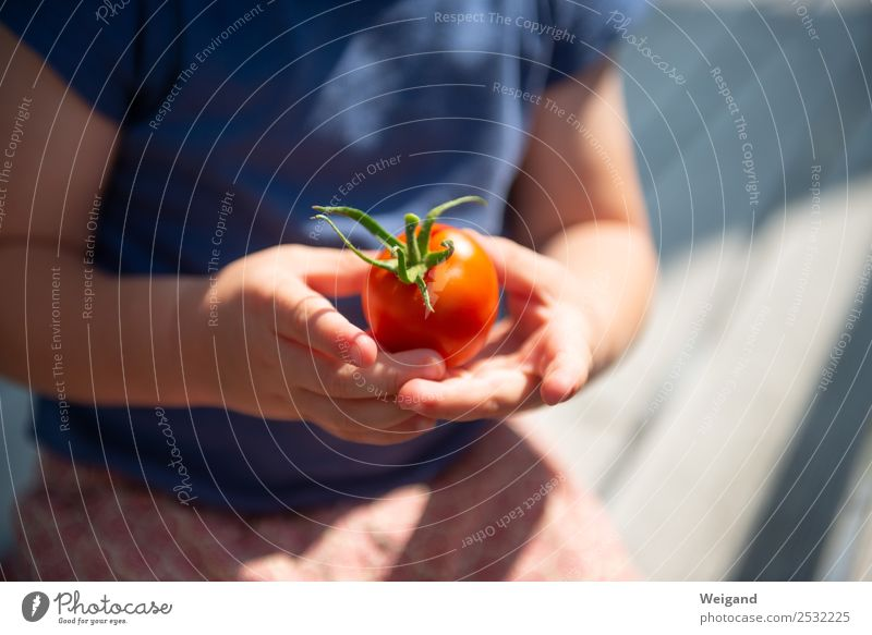 Tomato child III Food Vegetable Nutrition Eating Dinner Organic produce Vegetarian diet Slow food Kindergarten Child Toddler 1 Human being 1 - 3 years