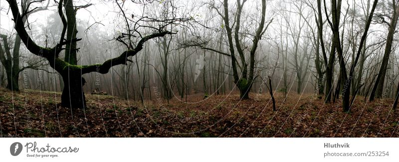 Nature Old Tree Plant Far-off places Forest Dark Autumn Environment Landscape Gray Brown Fog Free Wild Authentic