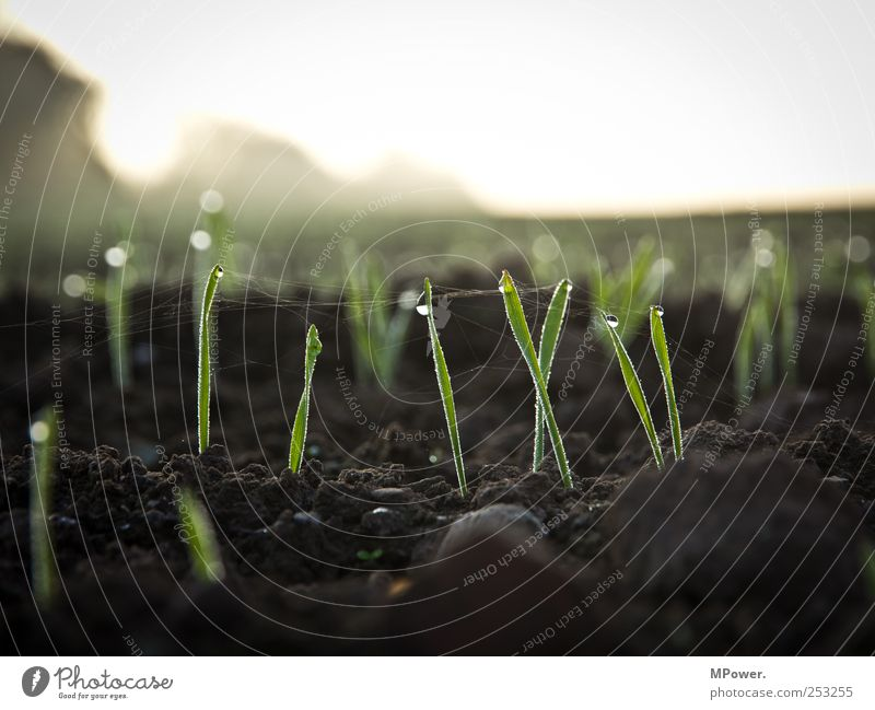 sprout Nature Landscape Earth Drops of water Sky Horizon Autumn Weather Plant Grass Agricultural crop Growth Brown Green Style Blade of grass Spider's web Field
