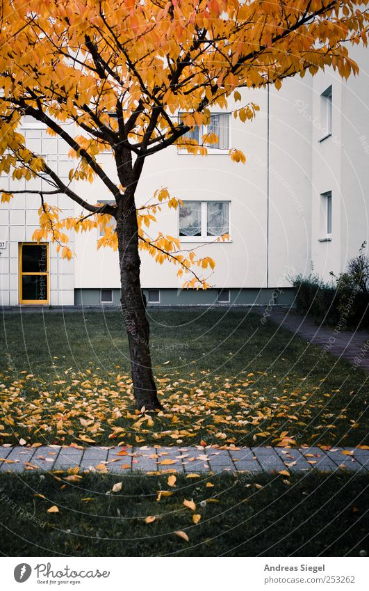 Picture of my life Environment Landscape Autumn Tree Bushes Leaf Meadow House (Residential Structure) Apartment Building Prefab construction Redevelop Facade