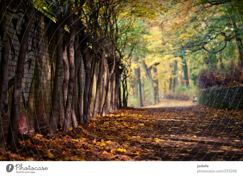 Nature Tree Plant Calm Loneliness Yellow Autumn Environment Landscape Lanes & trails Wall (barrier) Gold Autumn leaves Peaceful Autumnal Autumnal colours