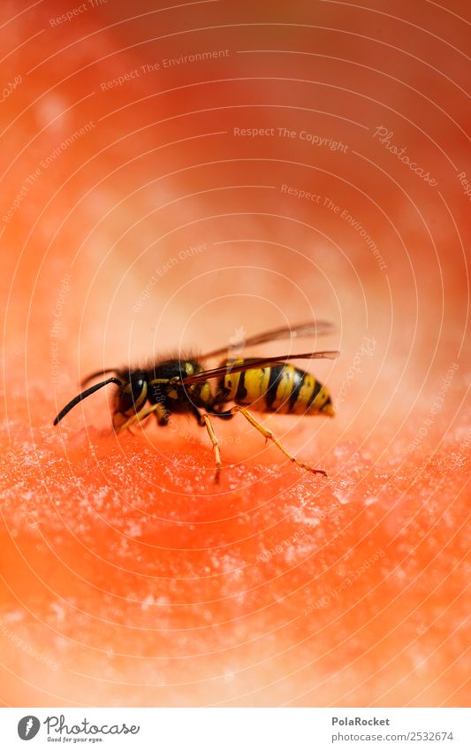 #A# can't see well Art Work of art Esthetic Wasps Insect Insect bite Insect repellent Nature Derby Summer Summer's day Dangerous Pierce Eating Colour photo