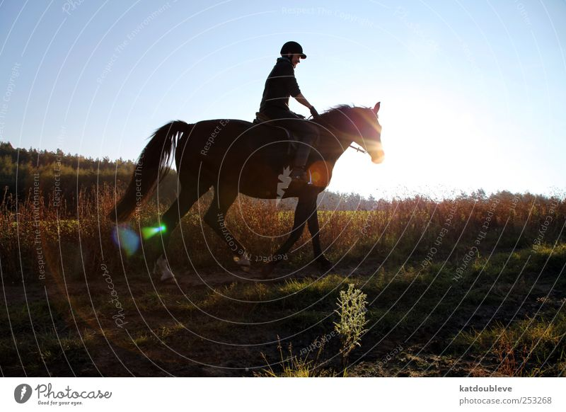 le cheval Ride Freedom Hiking Sports Equestrian sports Androgynous Environment Nature Landscape Plant Earth Sky Sunrise Sunset Sunlight Autumn Beautiful weather