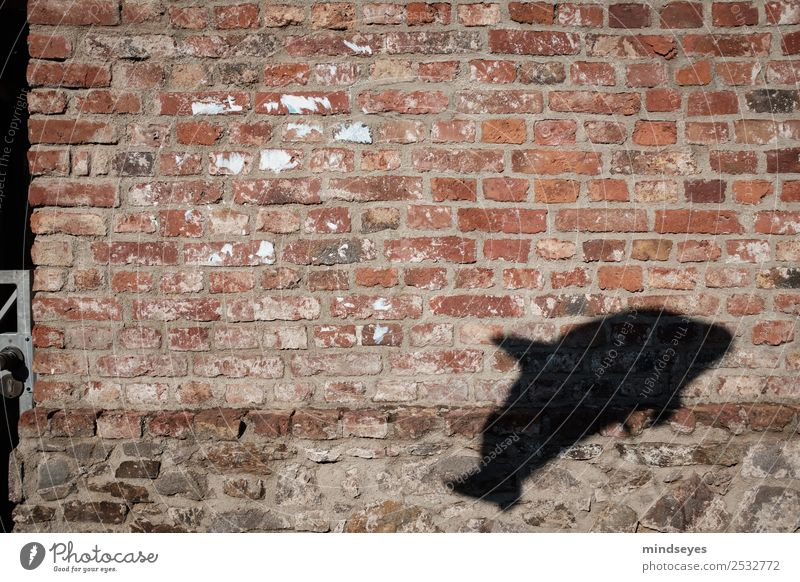 Defin shadow on brick wall Wall (barrier) Wall (building) Animal Dolphin Shadow Playing Historic Shadow play Flying Float in the water Balloon Exterior shot