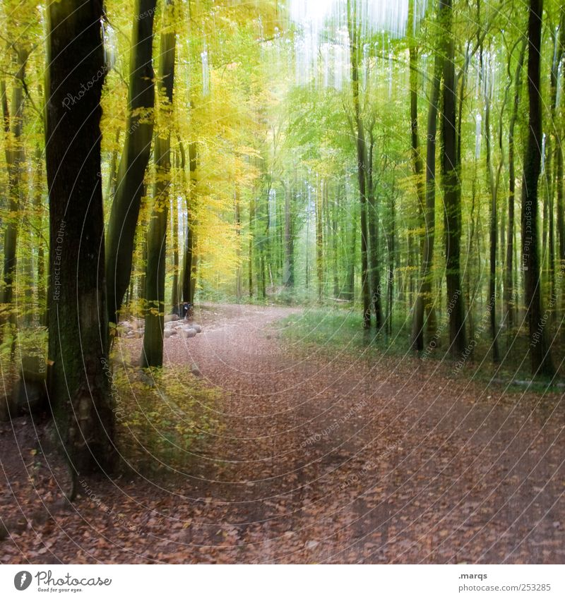 Nature Forest Relaxation Colour Autumn Lanes & trails Trip Footpath To enjoy
