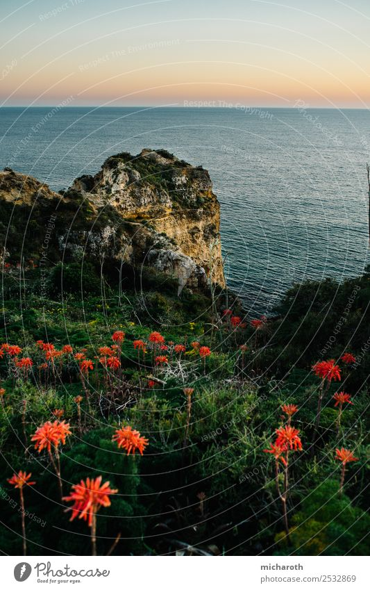 Sunset over the sea, flowers in the foreground Nature Landscape Earth Water Sky Sunrise Beautiful weather Flower Grass Rock Ocean Free Blue Green Orange Red