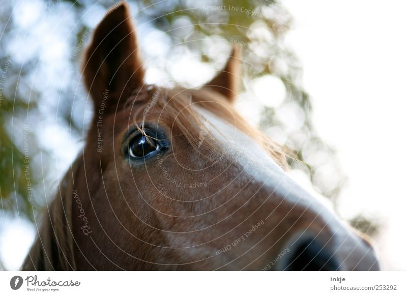 Beautiful Animal Meadow Above Emotions Moody Brown Natural Stand Horse Animal face Curiosity Near Pelt Listening Bangs