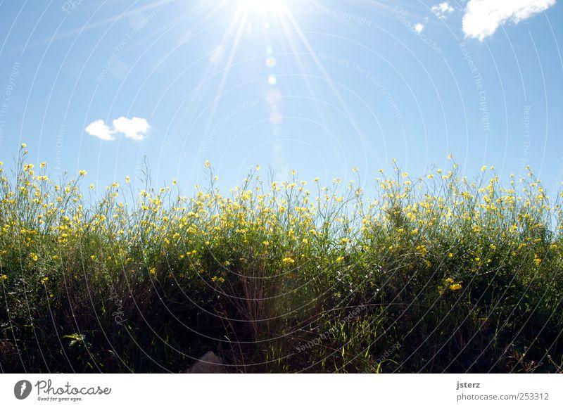Sky Nature Green Plant Sun Summer Calm Life Emotions Grass Happy Happiness Illuminate Warm-heartedness Blossoming Joie de vivre (Vitality)