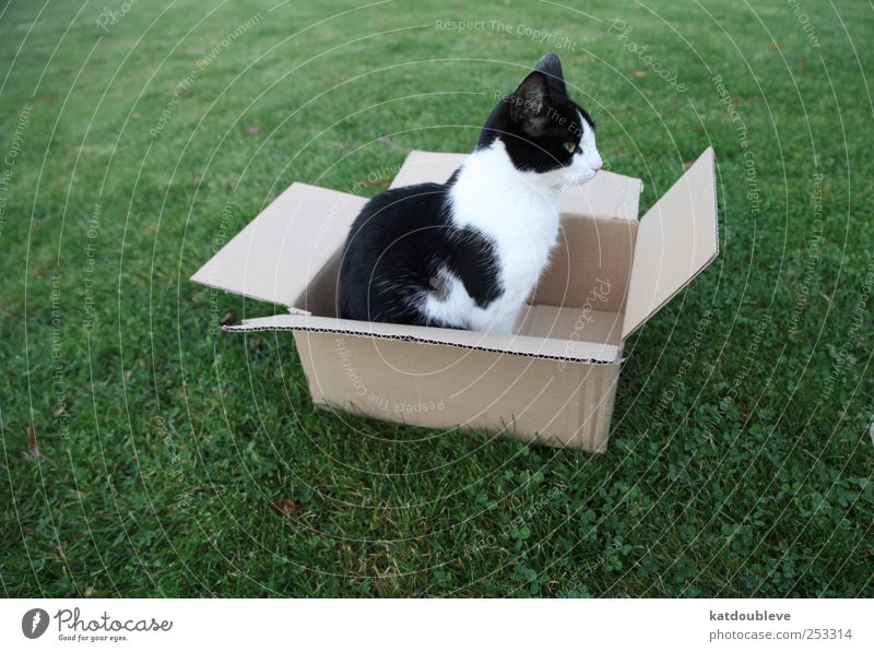 chat dans carton Nature Green Black Meadow Shopping Logistics Box Sell Flexible Package Packaging Love of animals Discordant Dedication