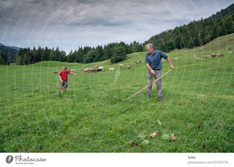 a gmate Wies`n Work and employment Agriculture Forestry Environment Nature Landscape Summer Climate Meadow Field Alps Reap Scythe Farmer mowing
