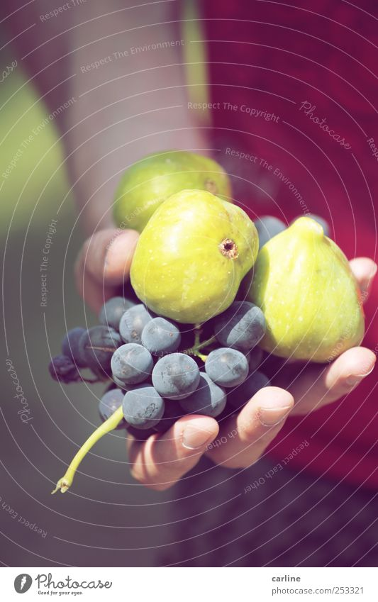 Nature Hand Green Red Nutrition Garden Food Healthy Fruit Fresh Italy Candy Harvest Mature To enjoy Markets