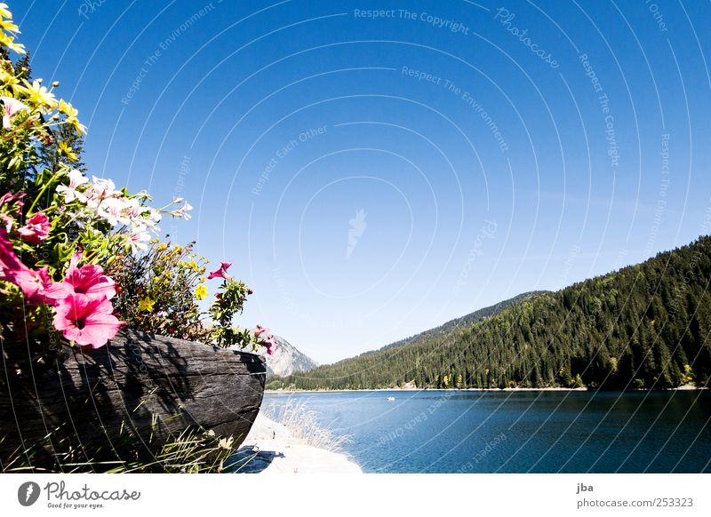 Flowers with lake view Harmonious Well-being Relaxation Calm Fragrance Trip Summer Sun Waves Mountain Hiking Nature Landscape Plant Air Water Sky Autumn