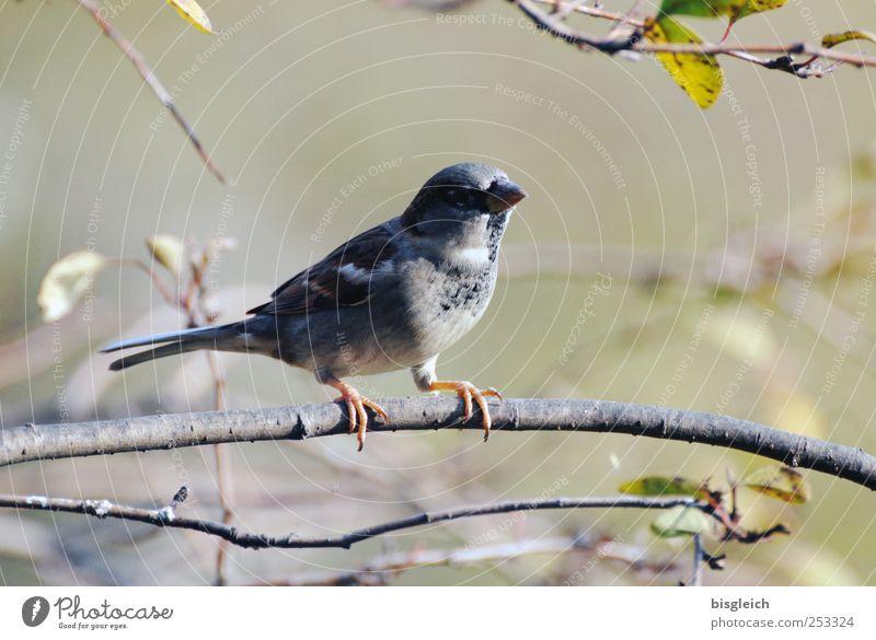 Green Animal Gray Brown Bird Sit Feather Beak Claw