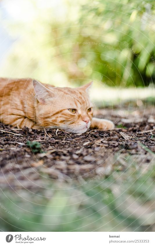 Cat wakes up Lifestyle Harmonious Relaxation Calm Leisure and hobbies Nature Plant Earth Beautiful weather Warmth Bushes Garden Animal Pet Animal face Pelt 1