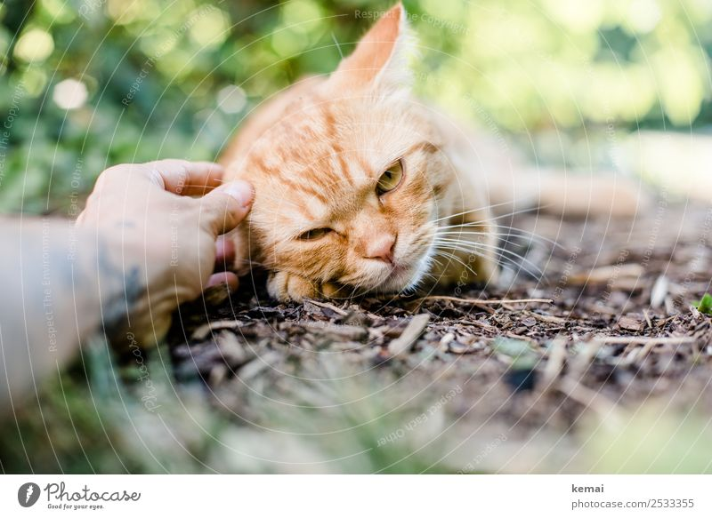 Cat Human being Summer Plant Hand Relaxation Animal Calm Lifestyle Warmth Garden Together Friendship Contentment Leisure and hobbies