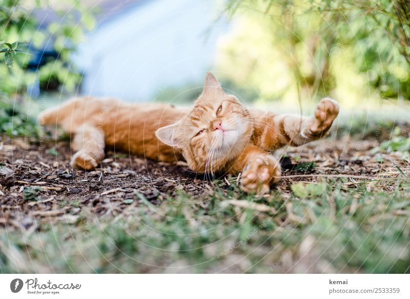 stretching Well-being Contentment Senses Relaxation Calm Leisure and hobbies Nature Earth Summer Beautiful weather Grass Bushes Garden Park Animal Pet Cat