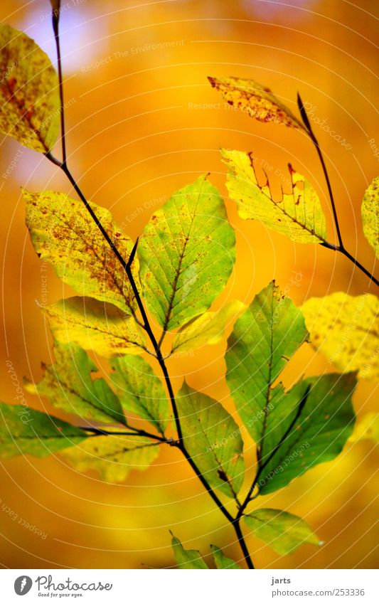 Nature Green Beautiful Tree Plant Leaf Calm Yellow Colour Life Autumn Environment Gold Fresh Serene Beautiful weather
