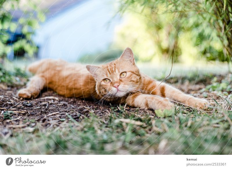 Cat stretches out Lifestyle Harmonious Well-being Contentment Senses Relaxation Calm Leisure and hobbies Nature Earth Beautiful weather Bushes Garden Animal Pet