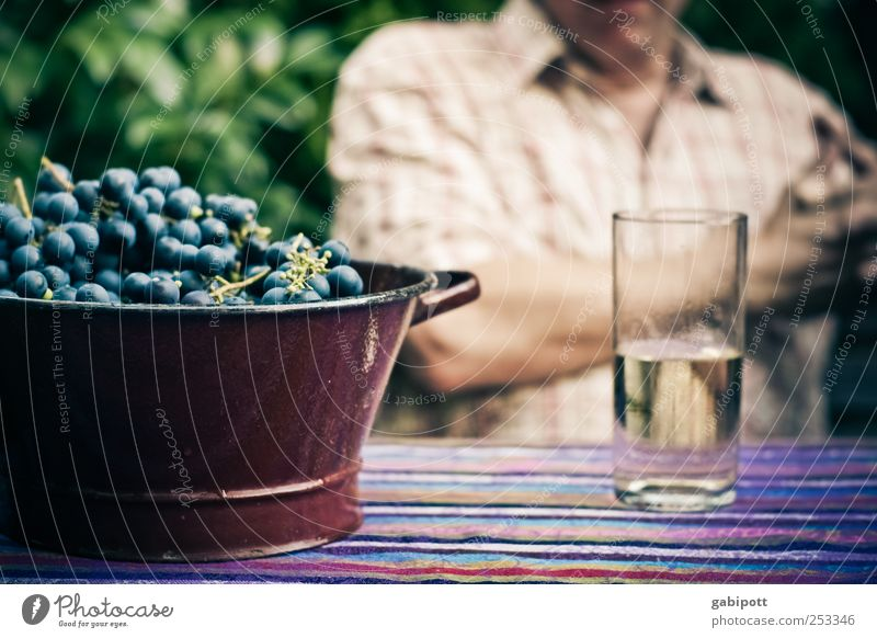 Ripe fruits Nutrition Picnic Bunch of grapes Beverage Cold drink Wine Spritzer Glass Healthy Alcoholic drinks Well-being Flat (apartment)