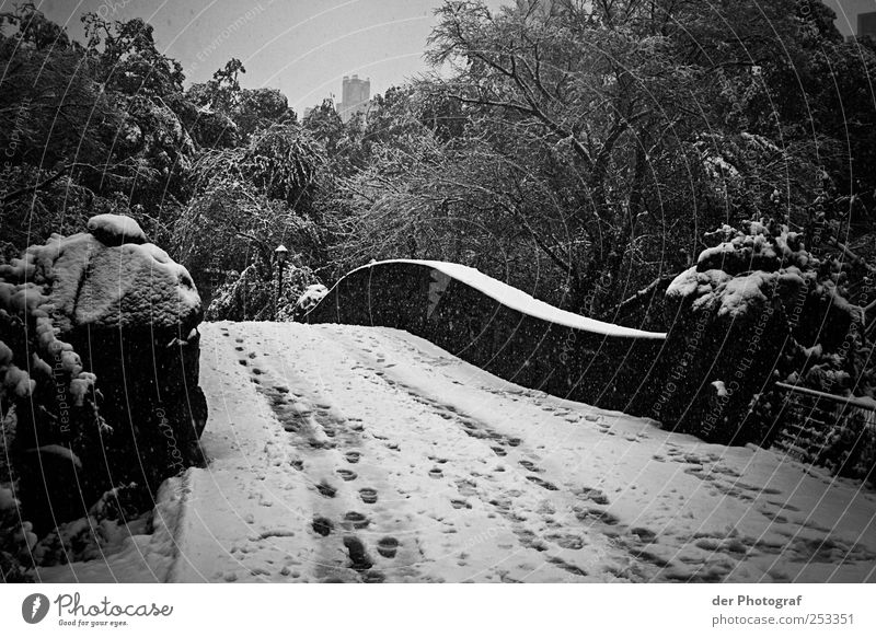 Winter Central Park Environment Nature Plant Sky Climate Bad weather Snow Tree Bridge Manmade structures Dark Cold Sadness Footprint Black & white photo