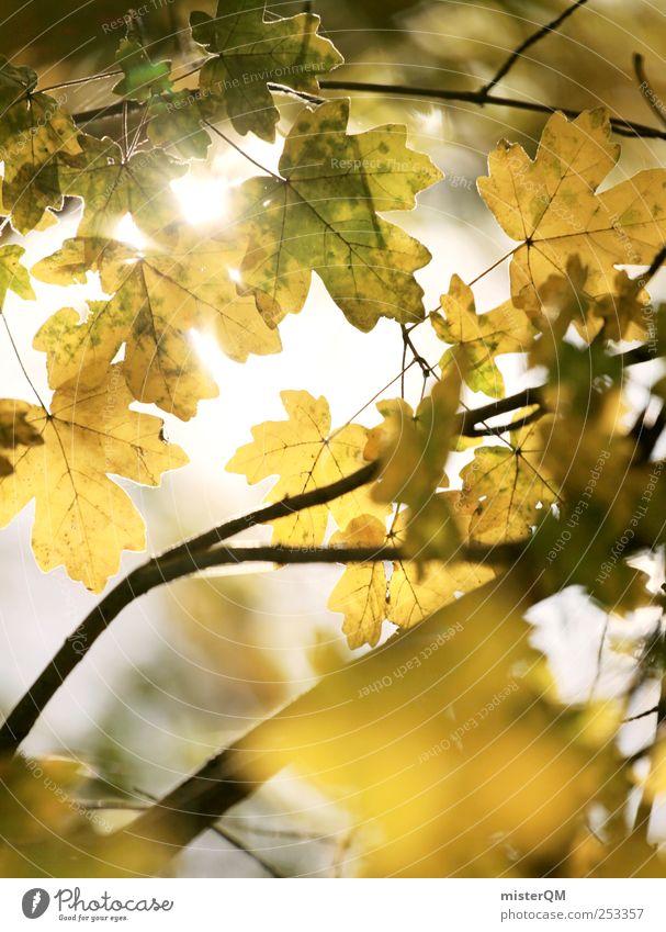 Nature Beautiful Plant Calm Loneliness Yellow Autumn Environment Landscape Lighting Esthetic Hope Lakeside Beautiful weather Autumn leaves Climate change
