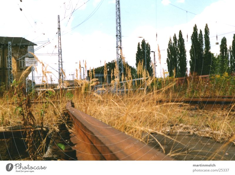 Old Tree Plant Loneliness Grass Building Metal Concrete Railroad Industry Electricity Broken Railroad tracks Train station GDR Electricity pylon