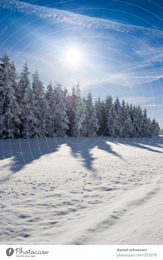 Sky Nature Blue White Tree Vacation & Travel Sun Winter Forest Environment Landscape Snow Mountain Ice Hiking Trip