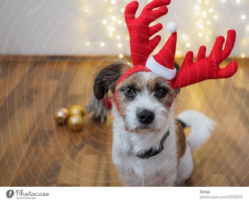 Dog White Red Animal Funny Brown Orange Moody Illuminate Decoration Gold Glittering Kitsch Pet Toys
