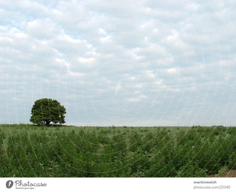Sky Tree Green Clouds Meadow Field