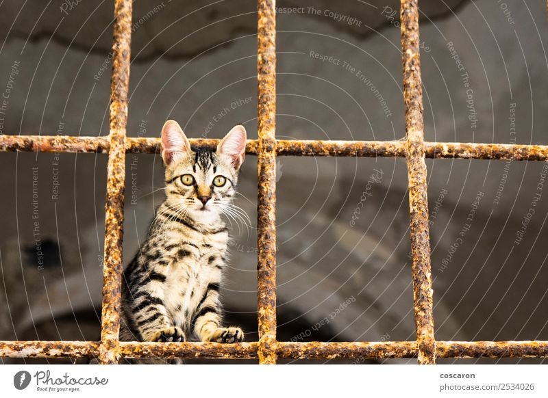 Little cat behind metal bars. Stray cat Beautiful Face House (Residential Structure) Nature Animal Fur coat Pet Cat Cute Brown Green Red White Sadness