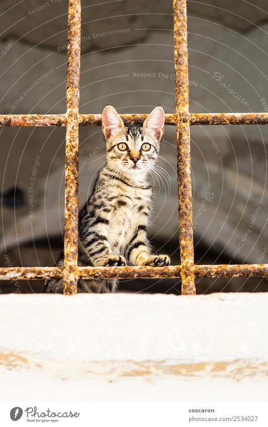 Little cat behind metal bars. Stray cat Beautiful Face House (Residential Structure) Nature Animal Fur coat Pet Cat 1 Cute Brown Green Red White Emotions