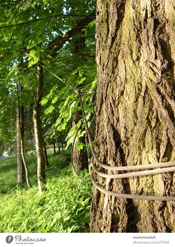 Hold me Tree Tree trunk Wire Green Forest Rope