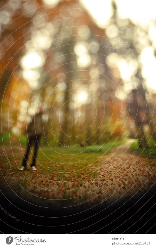 Human being Man Nature Adults Forest Autumn Life Lanes & trails Going Masculine To go for a walk Forwards Autumn leaves Come Against Surrealism