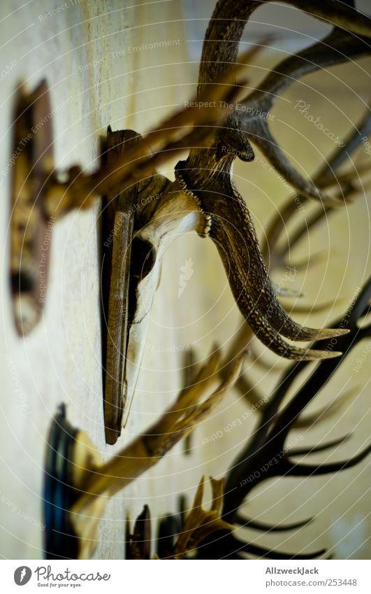 Decoration Transience Past Hunting Decline Hang Antlers Arrange Skeleton Red deer Trophy Wall decoration