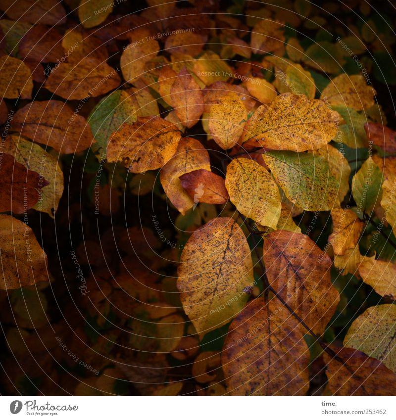 leaving leaves Calm Plant Autumn Tree Leaf Sadness Grief Death Transience Change Branch Beech tree Still Life Twig Colour photo Multicoloured Exterior shot