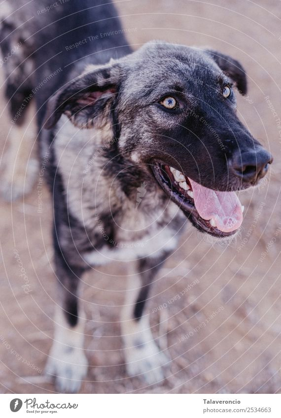 Happy Dog Joy Leisure and hobbies Freedom Sun Animal Pet Animal face 1 Exceptional Cool (slang) Fantastic Friendliness Healthy Large Brown Gray Happiness