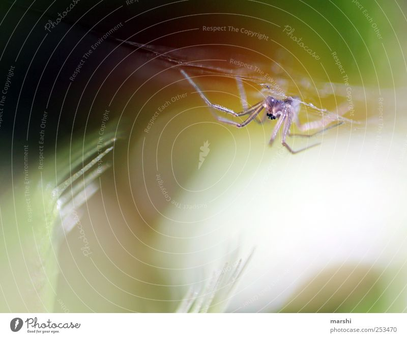 the monster strikes Nature Plant Animal Spider 1 Small Venus' flytrap Thorny Trenchant Spider's web Appetite Spider legs Colour photo Interior shot Blur