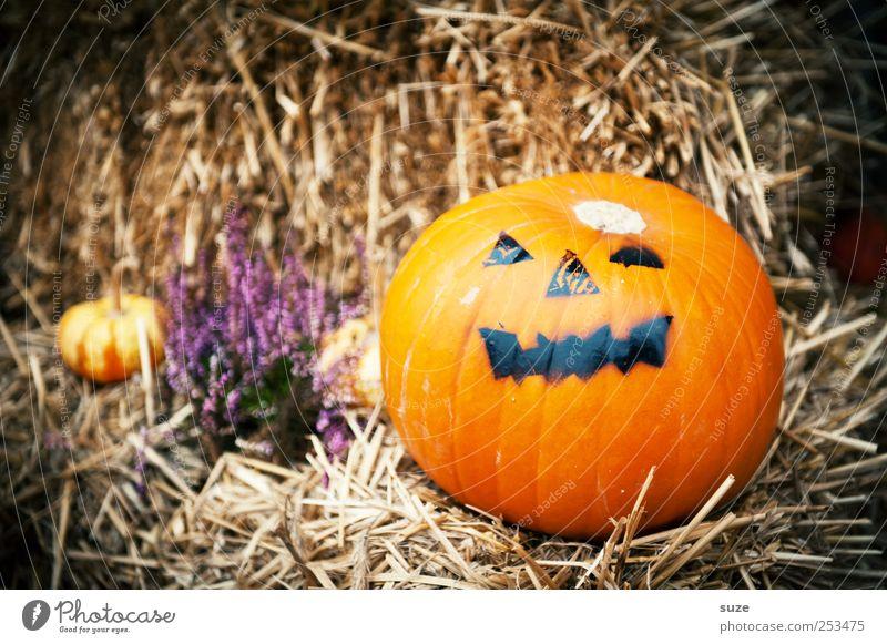 Mr. Green Food Vegetable Organic produce Vegetarian diet Joy Face Decoration Feasts & Celebrations Hallowe'en Autumn Funny Round Orange Pumpkin Straw