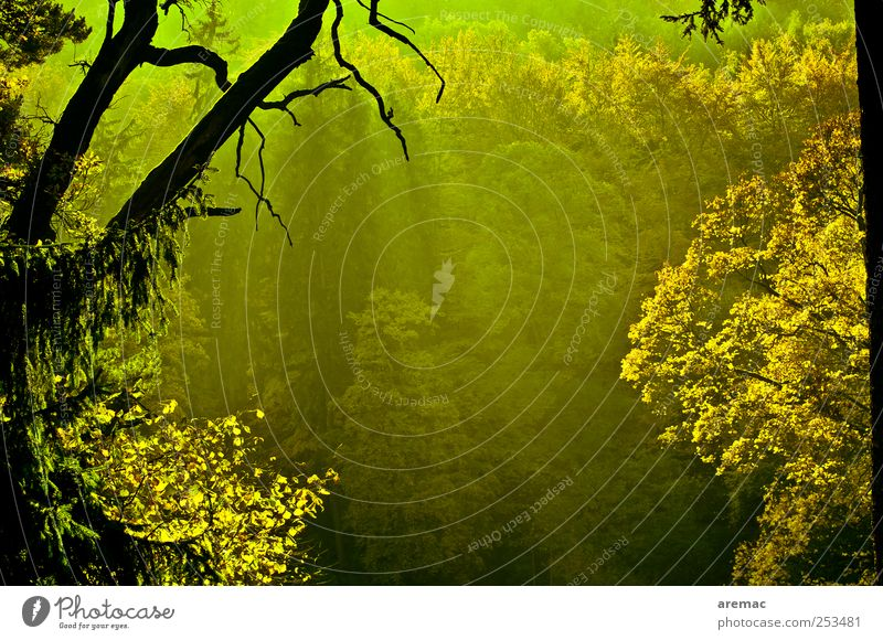 Nature Green Tree Plant Forest Autumn Landscape Emotions Moody Park Fog Transience Branch Beautiful weather