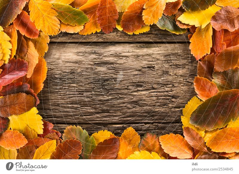 Autumn Leaves Forming a Frame Nature Plant Leaf Wood Natural fall colorful Copy Space Rustic conceptual orange change Fallen seasonal frame Autumnal vintage