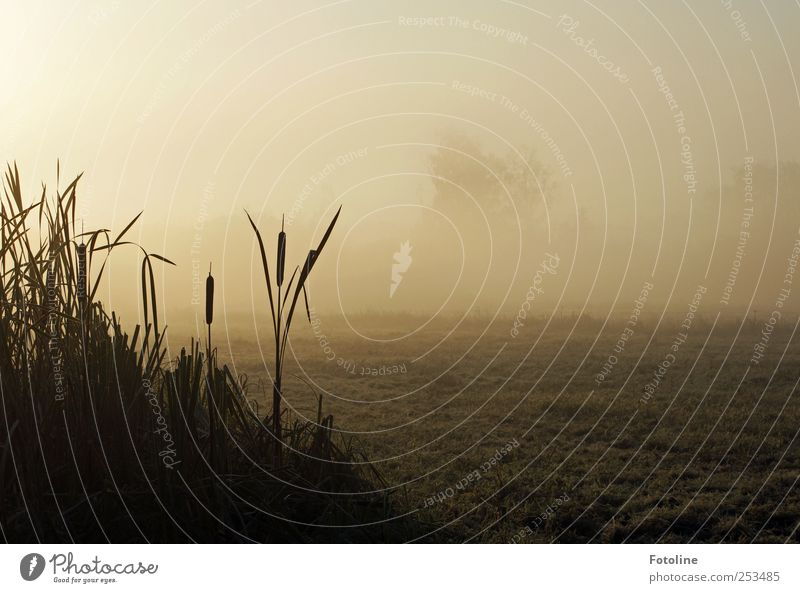 Nature Plant Dark Autumn Environment Landscape Field Fog Natural Common Reed