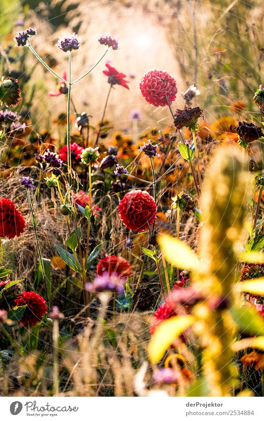 late summer meadow Vacation & Travel Tourism Trip Sightseeing City trip Hiking Environment Nature Landscape Plant Animal Summer Beautiful weather Grass Bushes