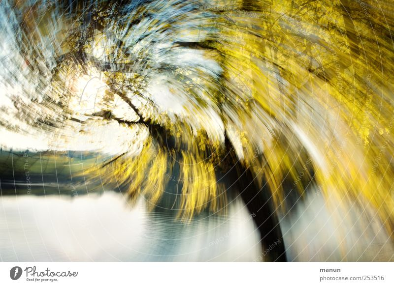 Nature Tree Yellow Autumn Art Wind Gold Crazy Exceptional Fantastic Lakeside Bizarre Chaos Willow tree Autumnal Birch tree