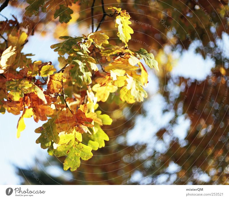 Nature Tree Plant Leaf Autumn Environment Landscape Natural Esthetic Autumnal Oak tree Colouring Early fall Autumnal colours Deciduous forest Automn wood