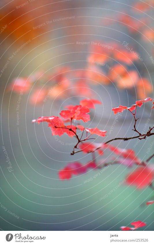Nature Tree Plant Leaf Environment Autumn Garden Park Natural Fresh Beautiful weather Exotic