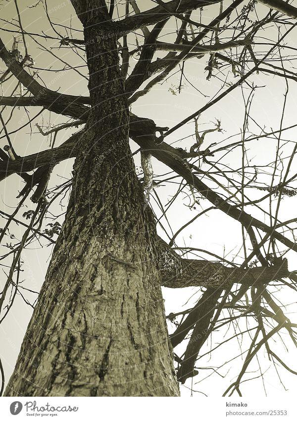 caos Nature Style tree Mexico tinted árbol