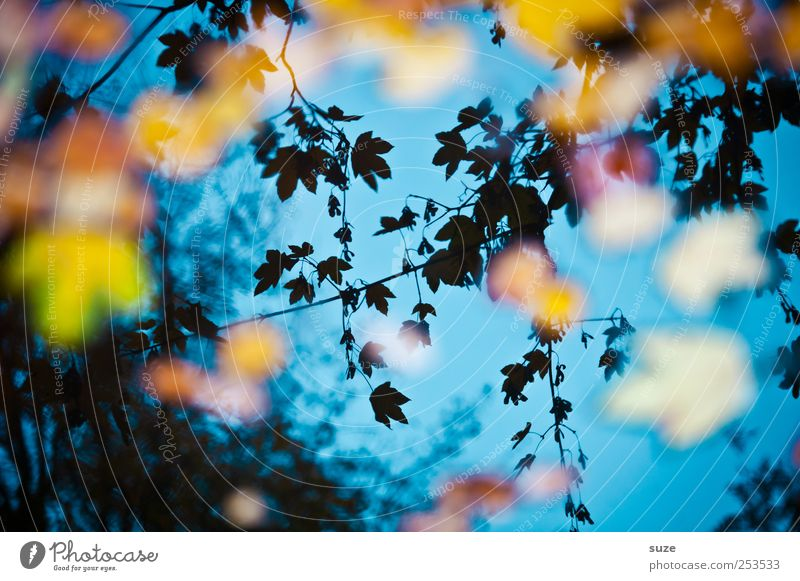 In between dreams Autumn Leaf Illuminate Exceptional Beautiful Blue Autumn leaves Maple leaf Early fall Autumnal Autumnal colours Dream Surface of water Lake