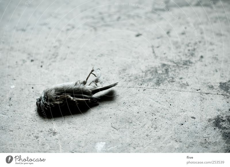 - Nature Animal Dead animal Bird 1 Old Sadness Grief Death Lie Colour photo Interior shot Day Downward