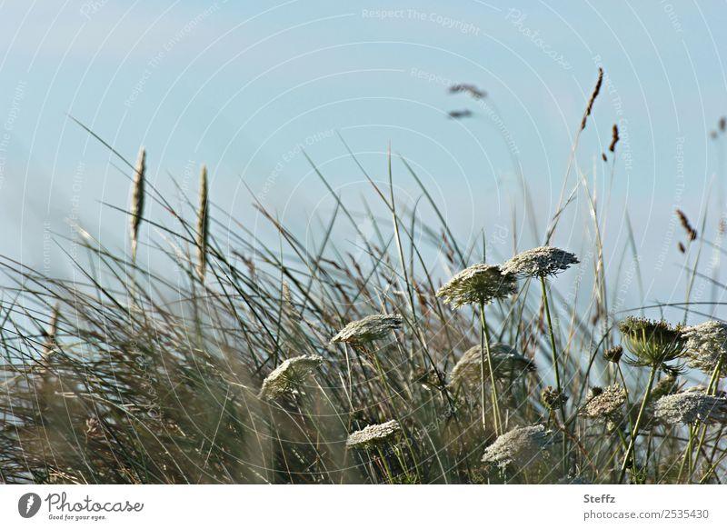 Nature Summer Blue Plant Green Landscape Environment Coast Grass Growth Wind Nordic Ireland Weathered Wild plant Decent