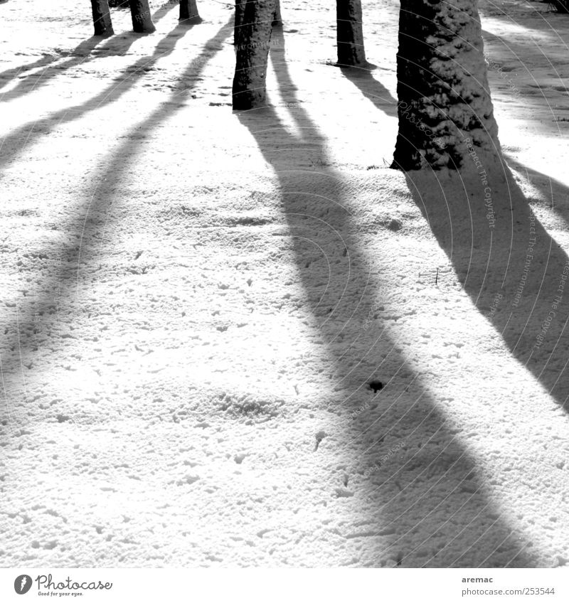 shadowy existence Nature Landscape Plant Winter Weather Beautiful weather Snow Tree Forest Esthetic Cold Calm Moody Shadow Black & white photo Exterior shot